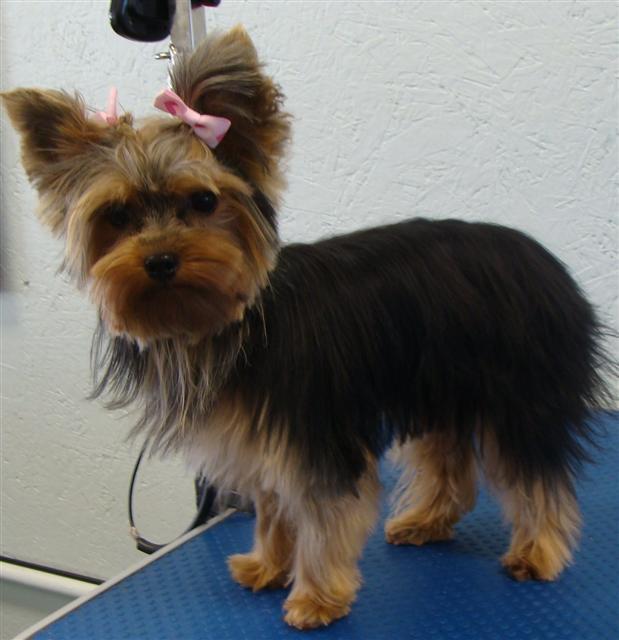 Lucy Puppy
